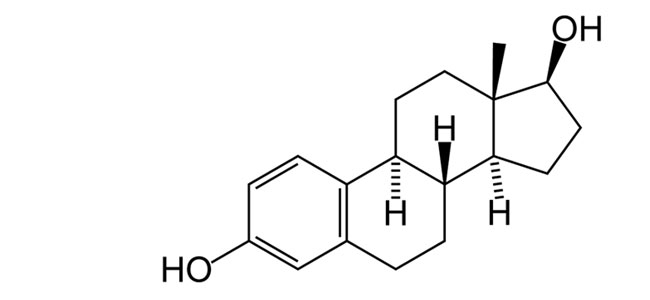 oestrogen testosterone connection image