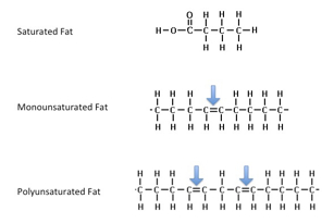 fats structure image